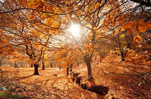 Ruta Bosque de Cobre y Ronda